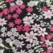 Bandana chimio léger fleuri - rose